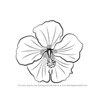 how to draw tennessee state flower learn how to draw fern fronds plants step by step to tennessee draw state how flower
