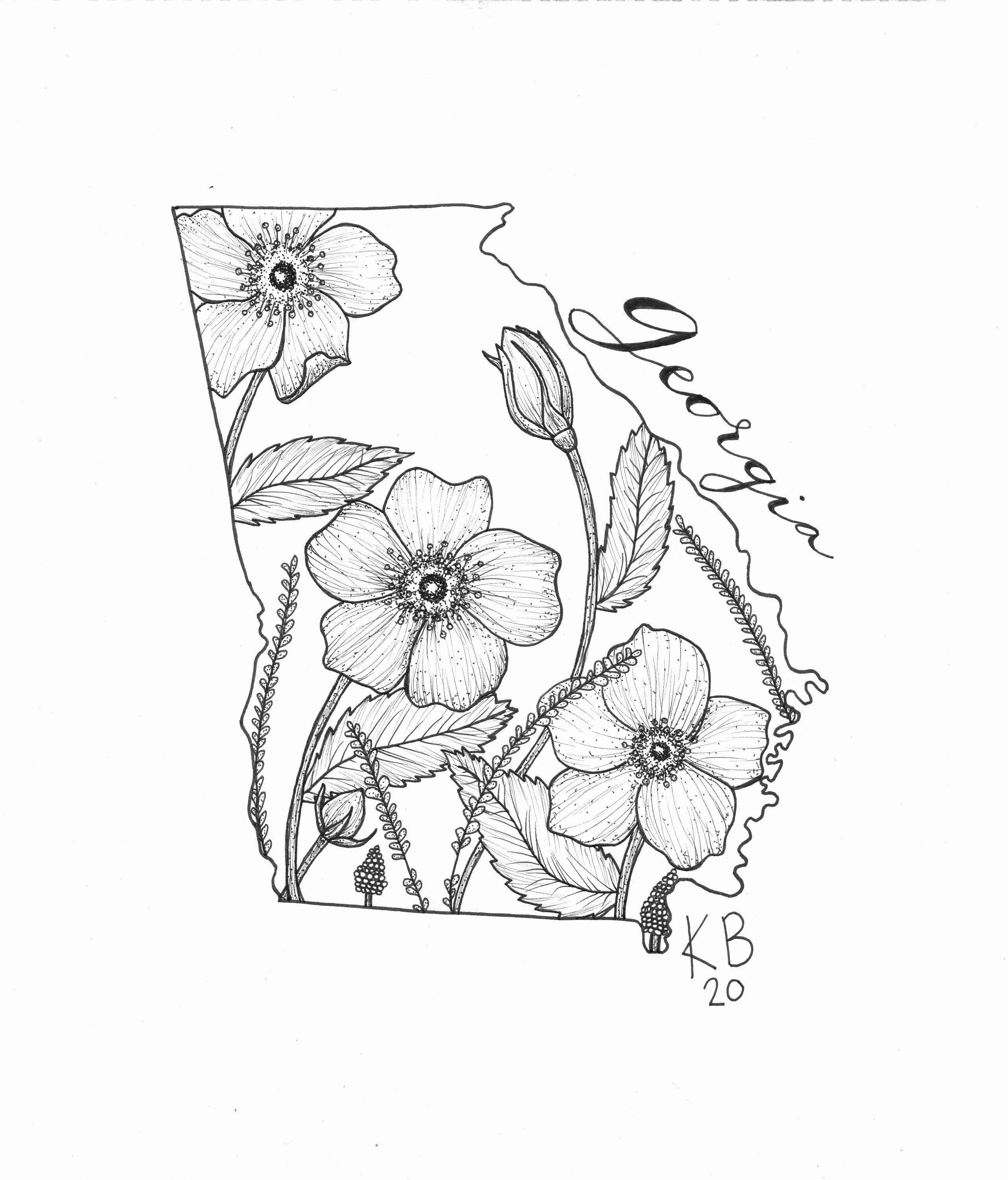 how to draw tennessee state flower passion flower clipart 20 free cliparts download images how to state tennessee flower draw