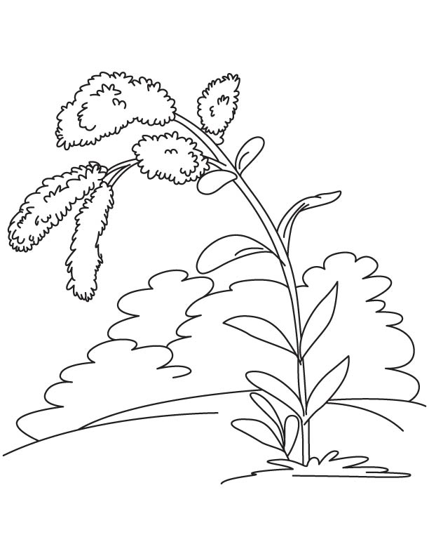 how to draw tennessee state flower state flower georgia cherokee rose svg cut file by tennessee draw flower to state how