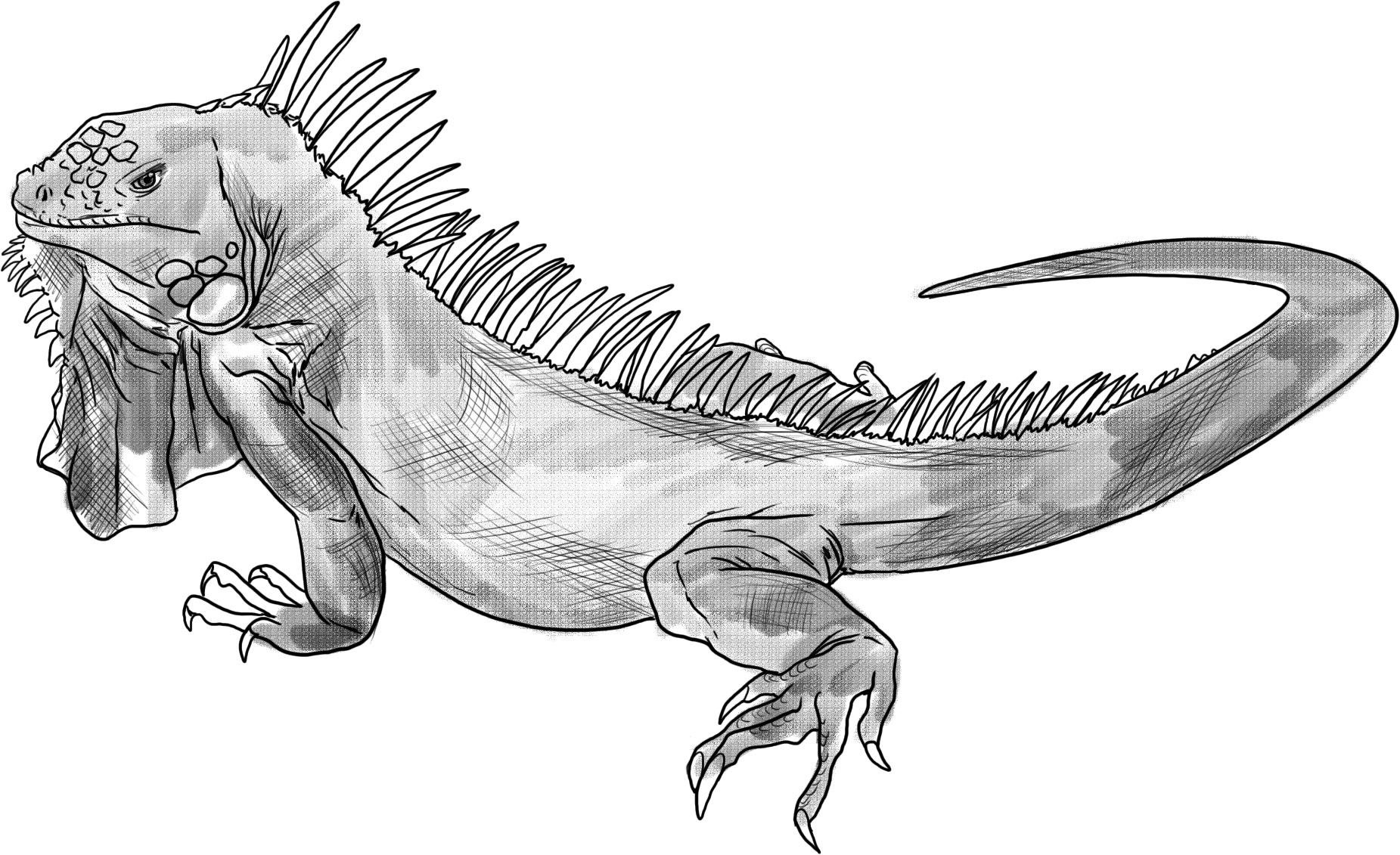 iguana coloring page iguana coloring pages to download and print for free iguana page coloring
