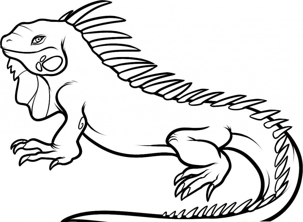 iguana coloring page large male dominant iguana coloring page download coloring iguana page