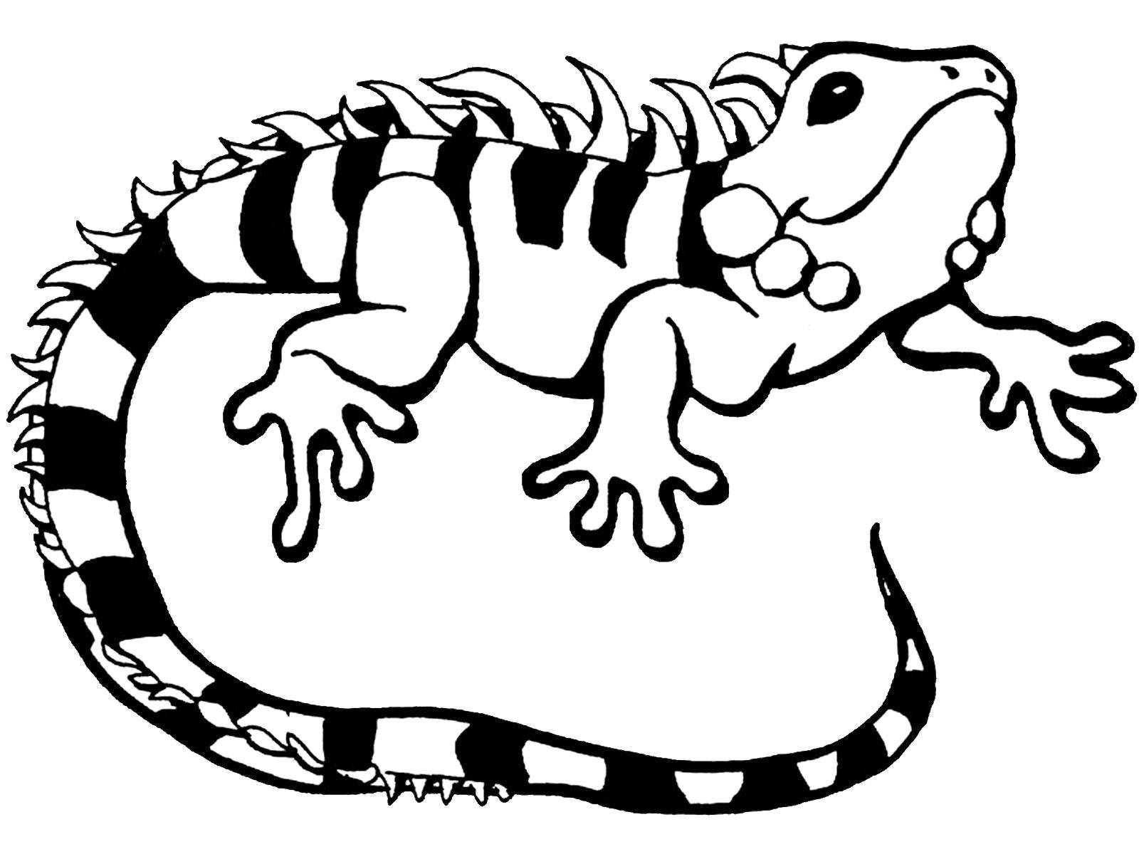 iguana coloring page stained glass pattern of iguana drawing iguana colouring iguana coloring page
