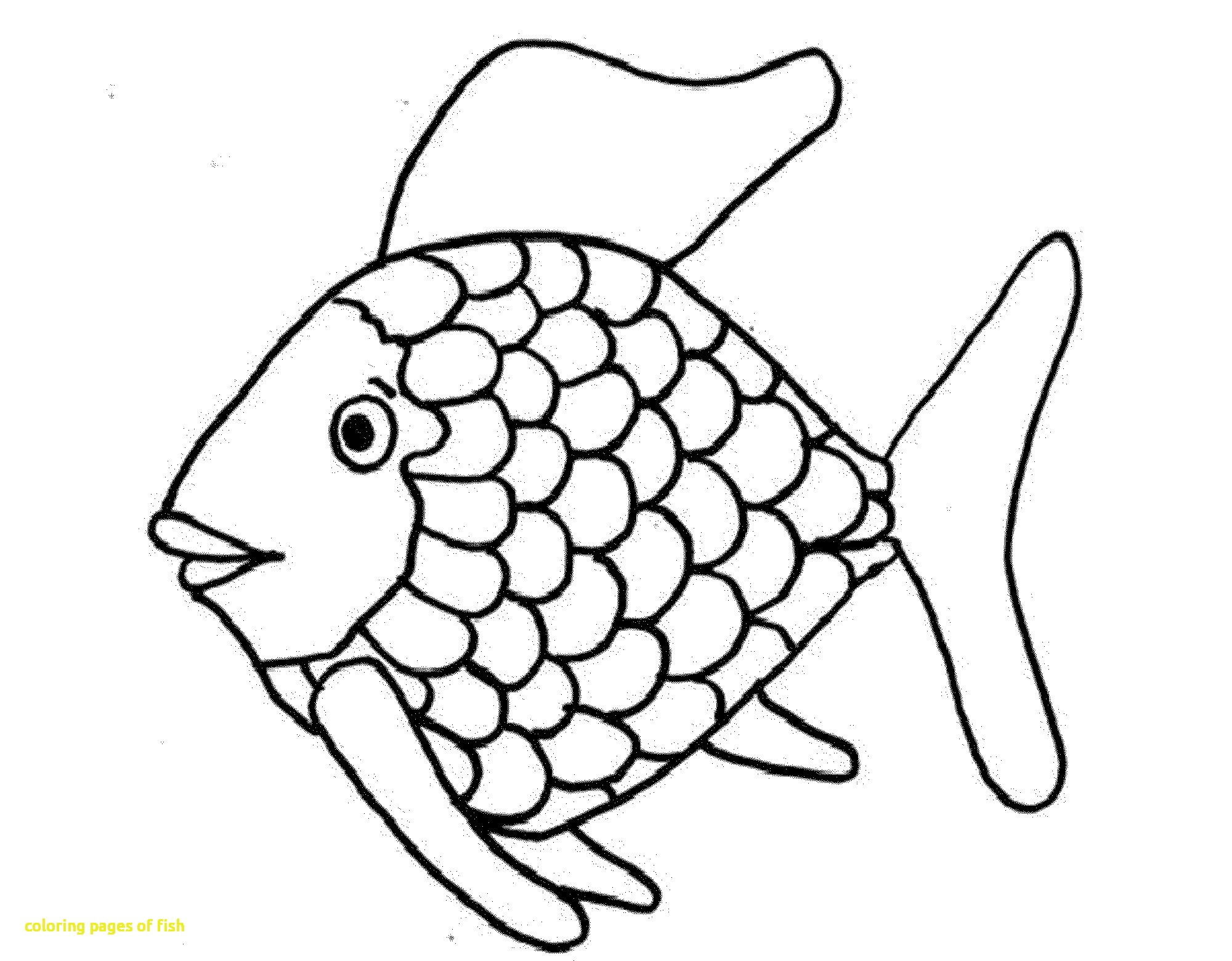 images of fish for colouring bass fish outline coloring pages bass fish outline colouring fish images of for
