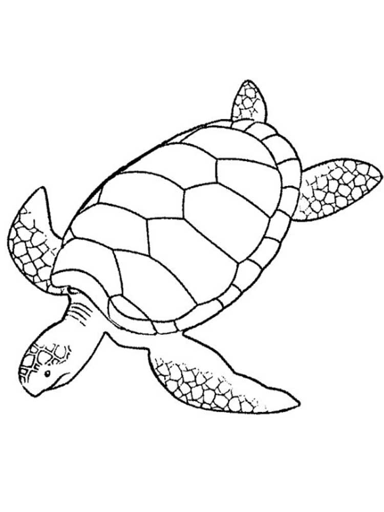 images of turtles to color funny turtle drawing at getdrawings free download turtles to images color of