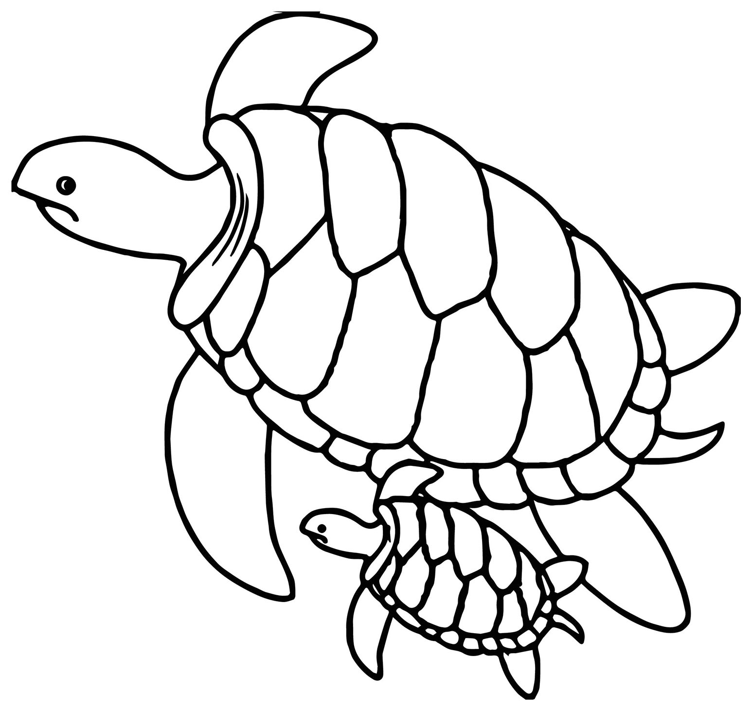 images of turtles to color pictures of reptiles for kids clipartsco images of to color turtles