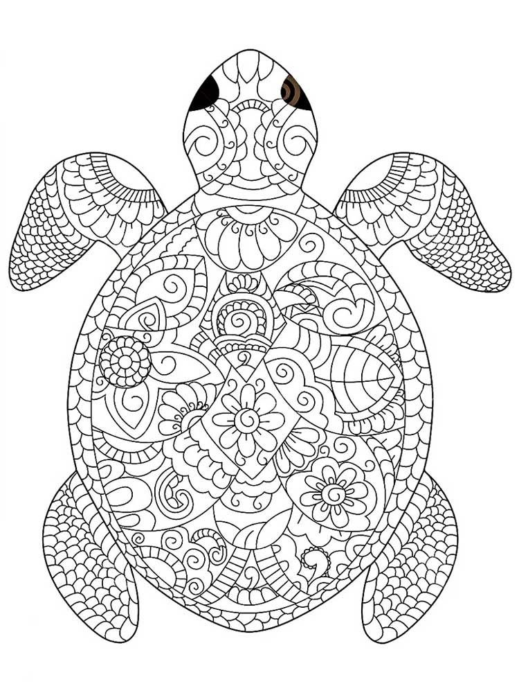 images of turtles to color print download turtle coloring pages as the to images turtles color of