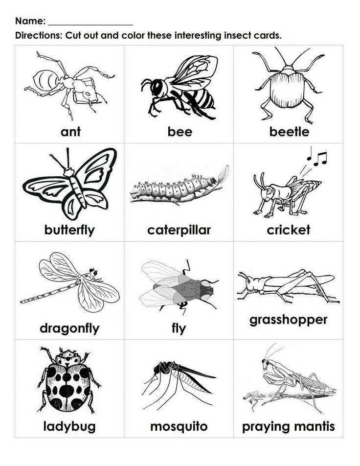 insects for coloring insect coloring download insect coloring for free 2019 for insects coloring