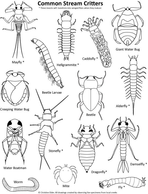 insects for coloring little bugs coloring pages for kids easy peasy and fun for insects coloring