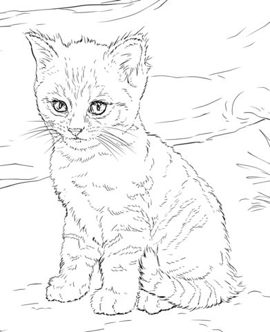 kids coloring pages kitten coloring page free printable cat coloring page blog kitten coloring pages kids