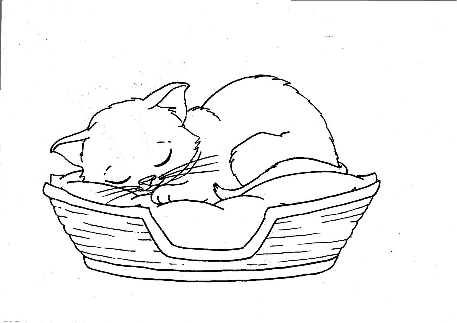 kids coloring pages kitten free printable kitten coloring pages for kids best coloring kids kitten pages