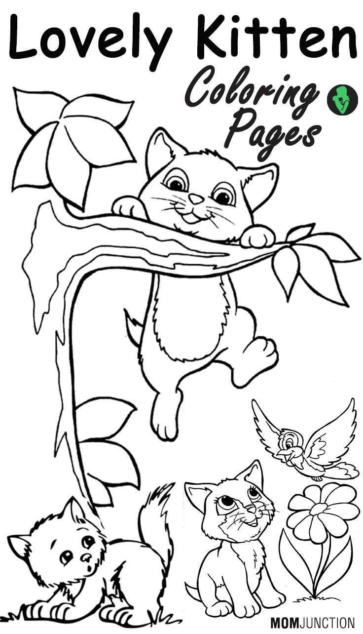 kids coloring pages kitten top 15 free printable kitten coloring pages online cat pages kids kitten coloring