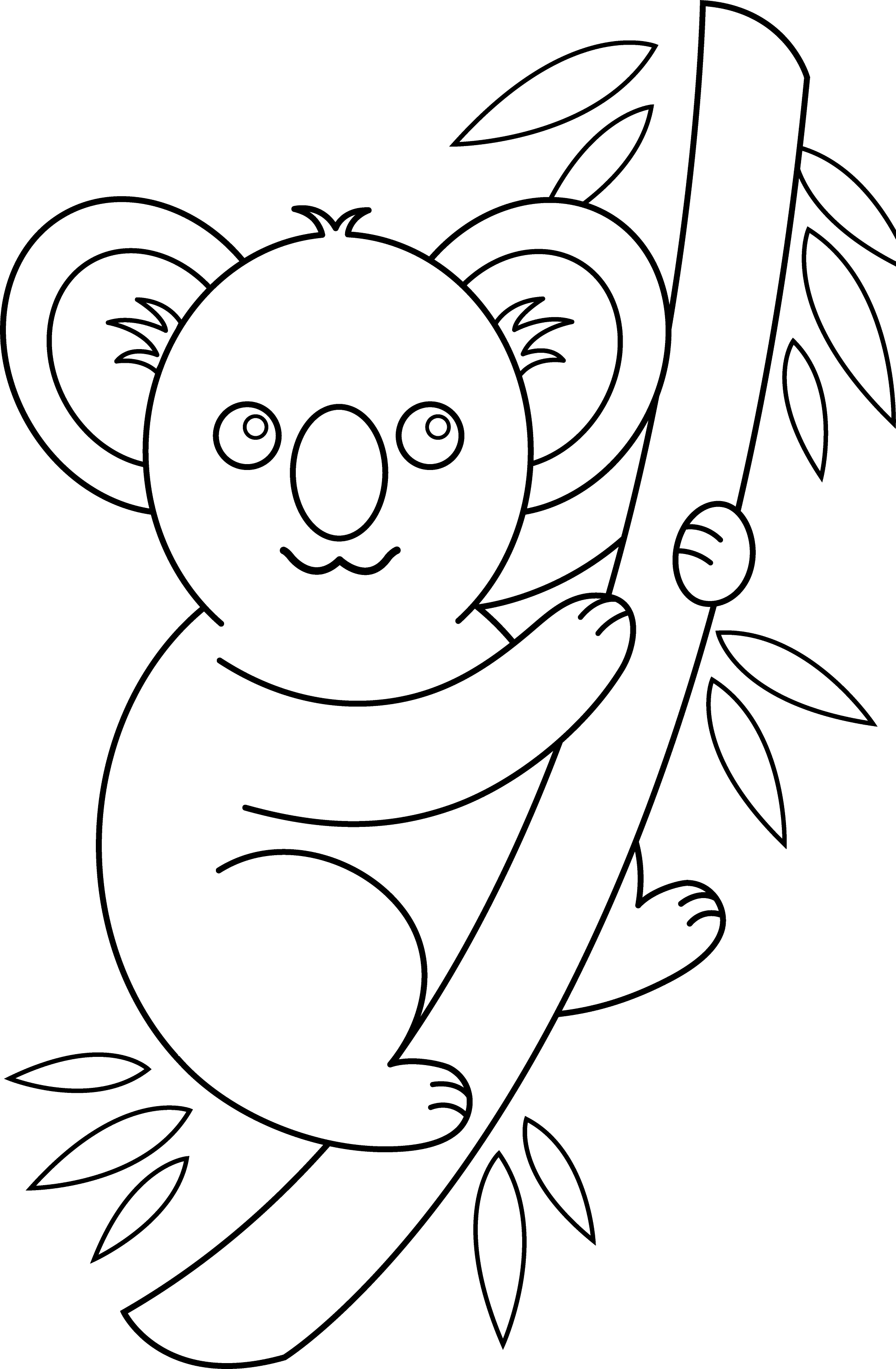 koala pictures to colour in free koala coloring pages for adults printable to koala pictures in to colour