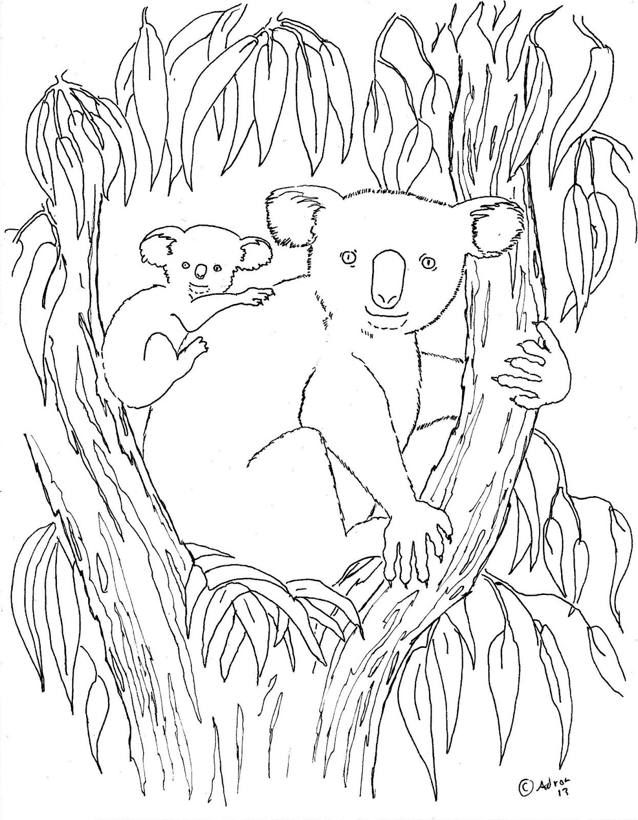 koala pictures to colour in free printable koala coloring pages for kids animal place in koala colour to pictures