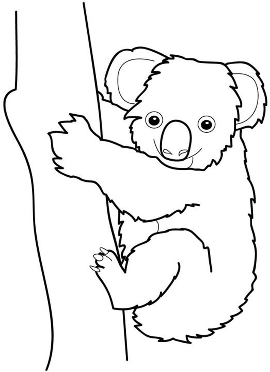 koala pictures to colour in free printable koala coloring pages for kids animal place koala in colour pictures to
