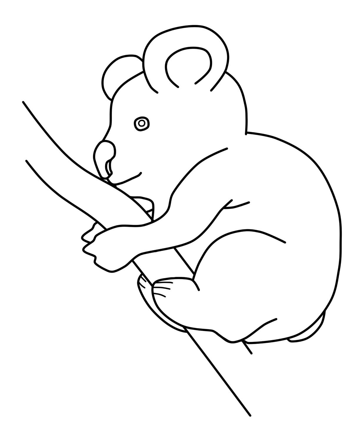 koala pictures to colour in free printable koala coloring pages for kids animal place koala pictures in colour to