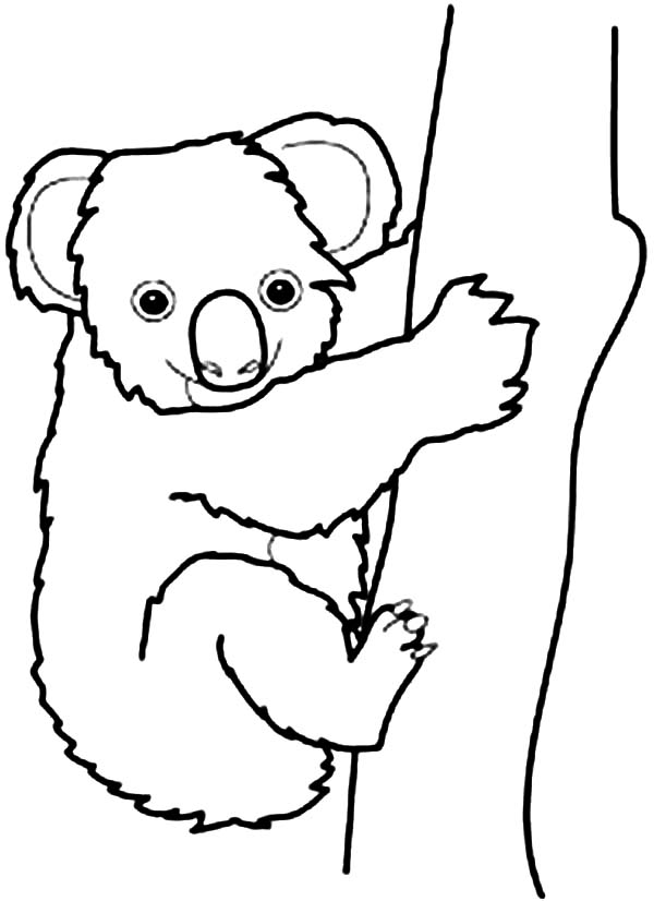 koala pictures to colour in free printable koala coloring pages for kids koala in to colour pictures