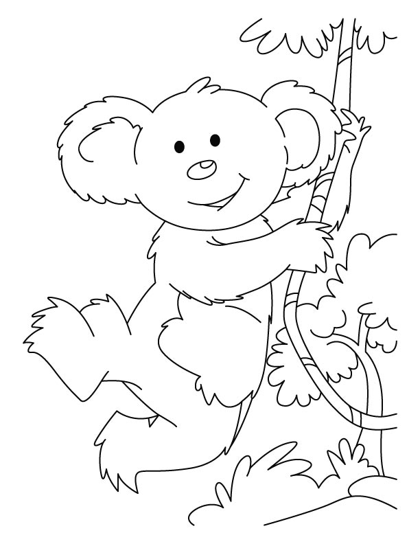 koala pictures to colour in free printable koala coloring pages for kids to pictures koala in colour