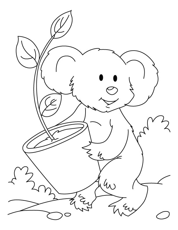 koala pictures to colour in koala coloring pages to download and print for free in koala to colour pictures