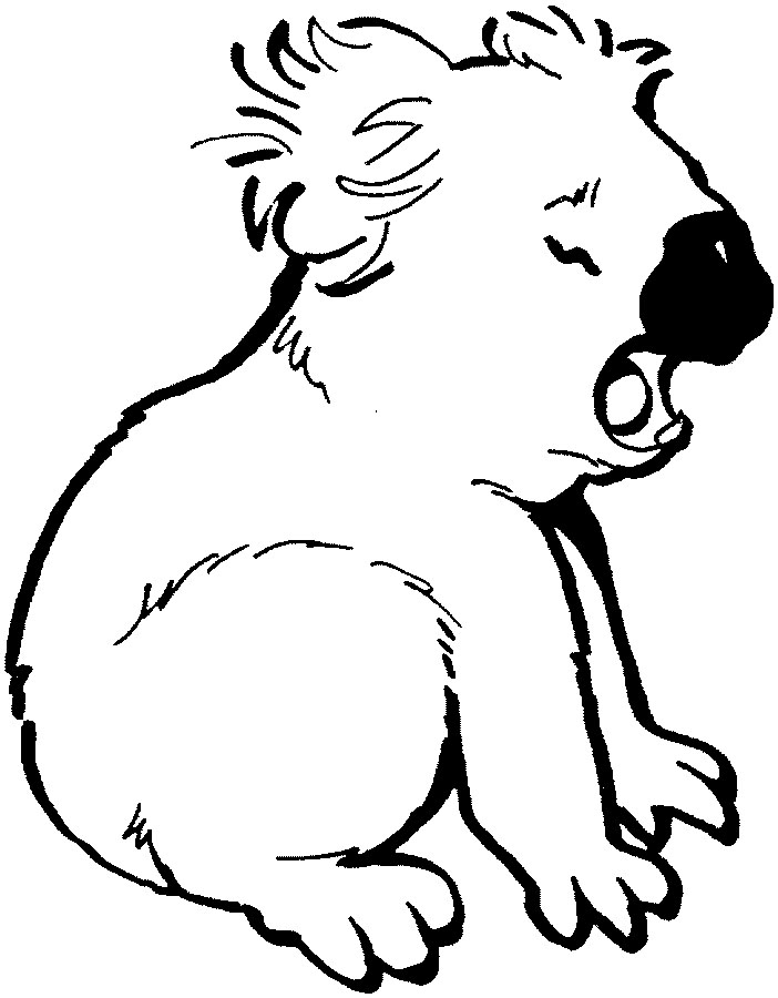 koala pictures to colour in printable koala coloring pages hd png download in pictures to koala colour
