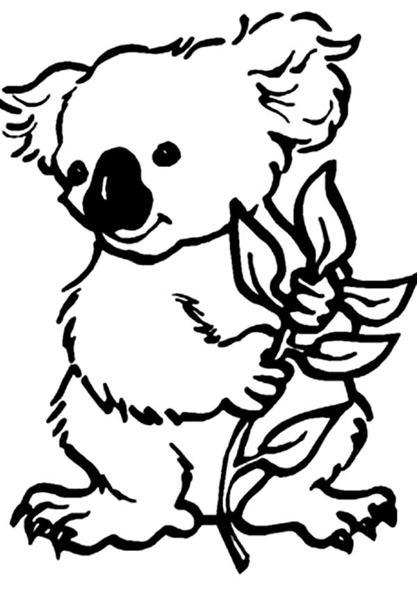 koala pictures to colour in wombat coloring page coloring home in to colour pictures koala