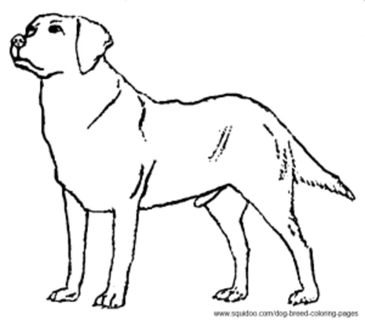 labrador dog coloring pages dog breed coloring pages hubpages coloring labrador pages dog