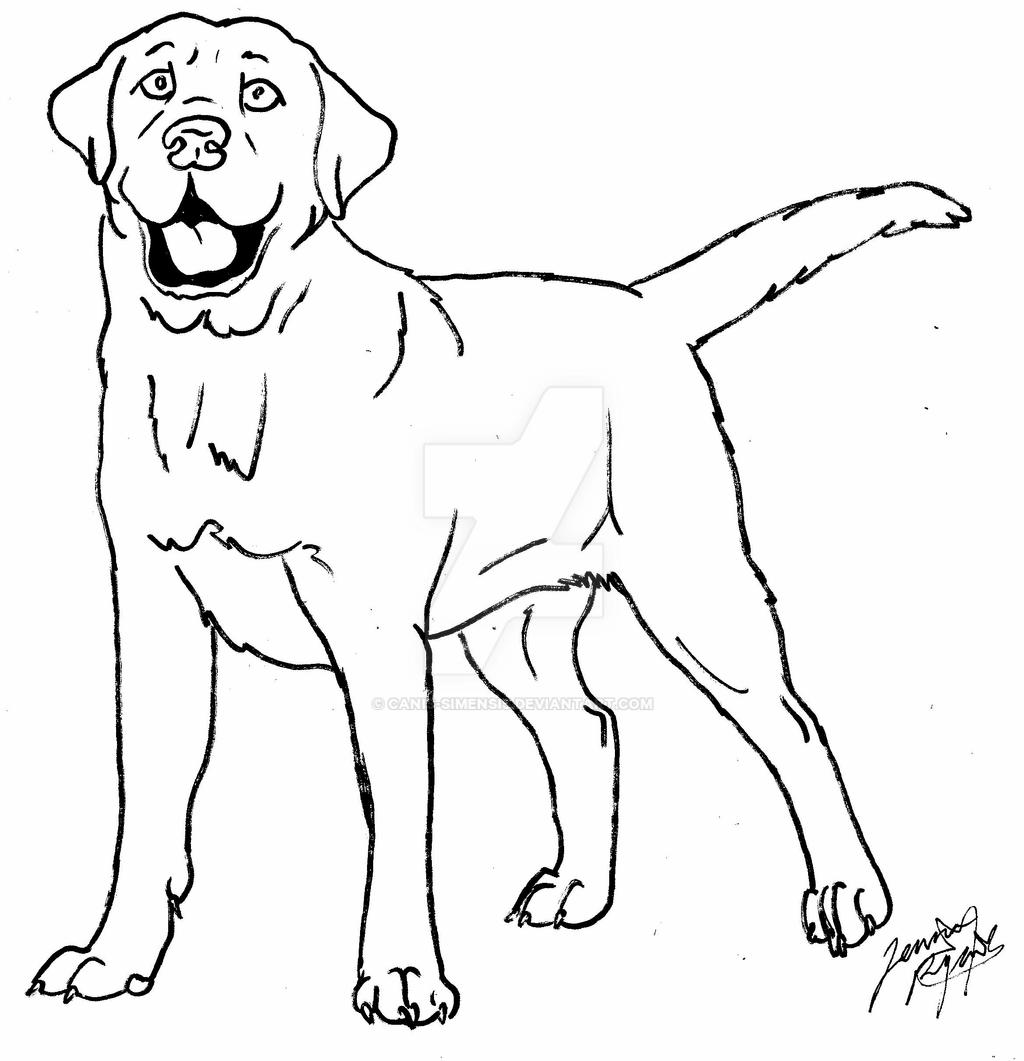 labrador dog coloring pages labrador line drawing at getdrawings free download labrador dog coloring pages