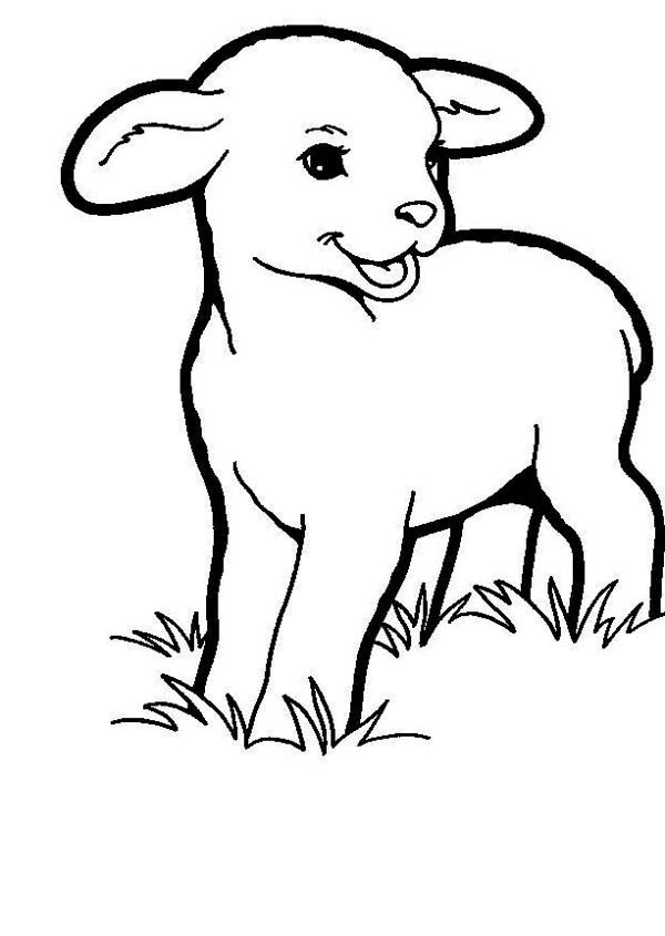 lamb pictures to colour free printable sheep coloring pages for kids pictures to colour lamb