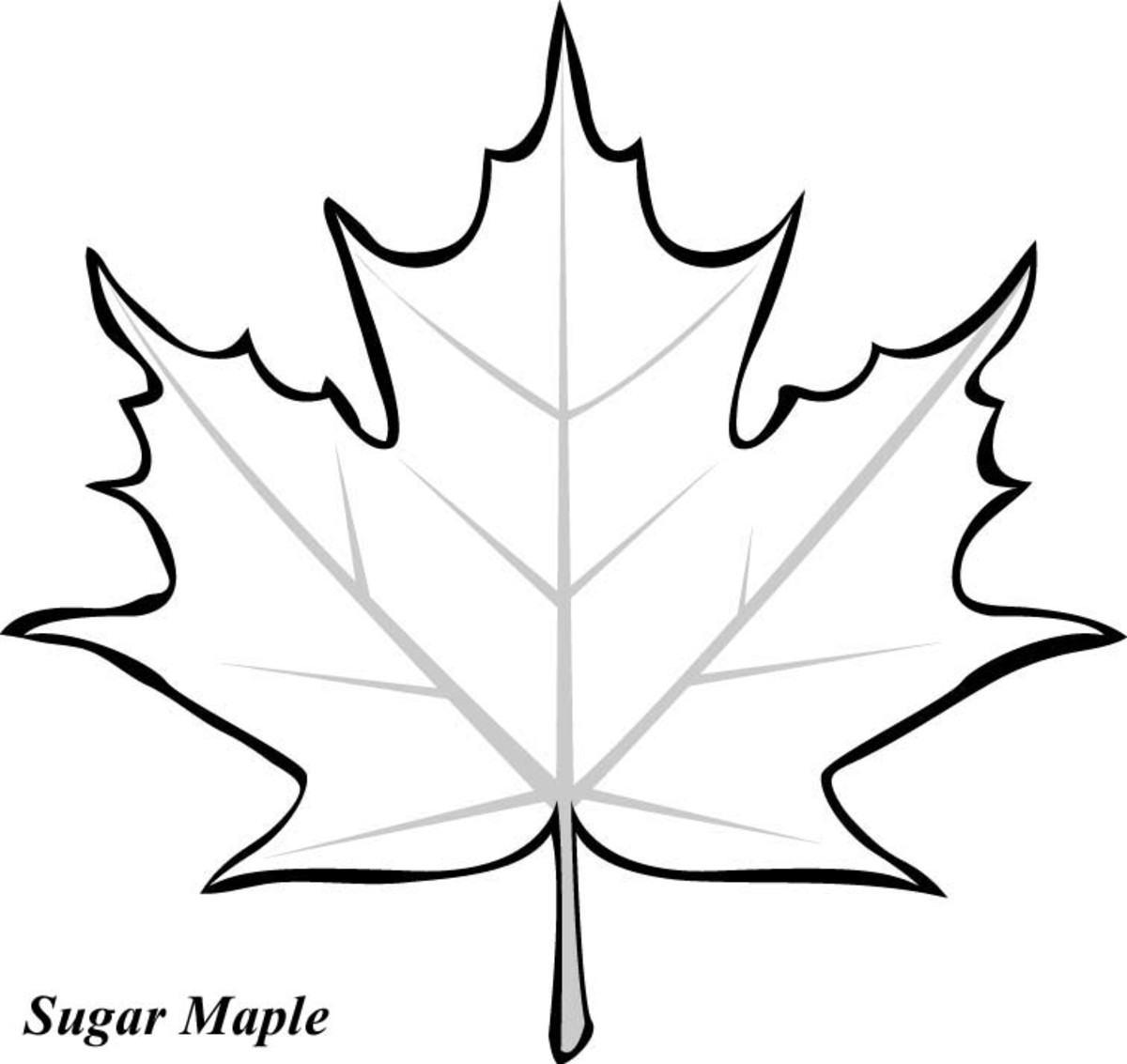 leaves coloring images fall leaves coloring pages getcoloringpagescom coloring leaves images