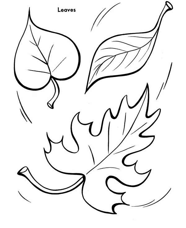leaves to colour in autumn leaves coloring page crayolacom leaves in colour to