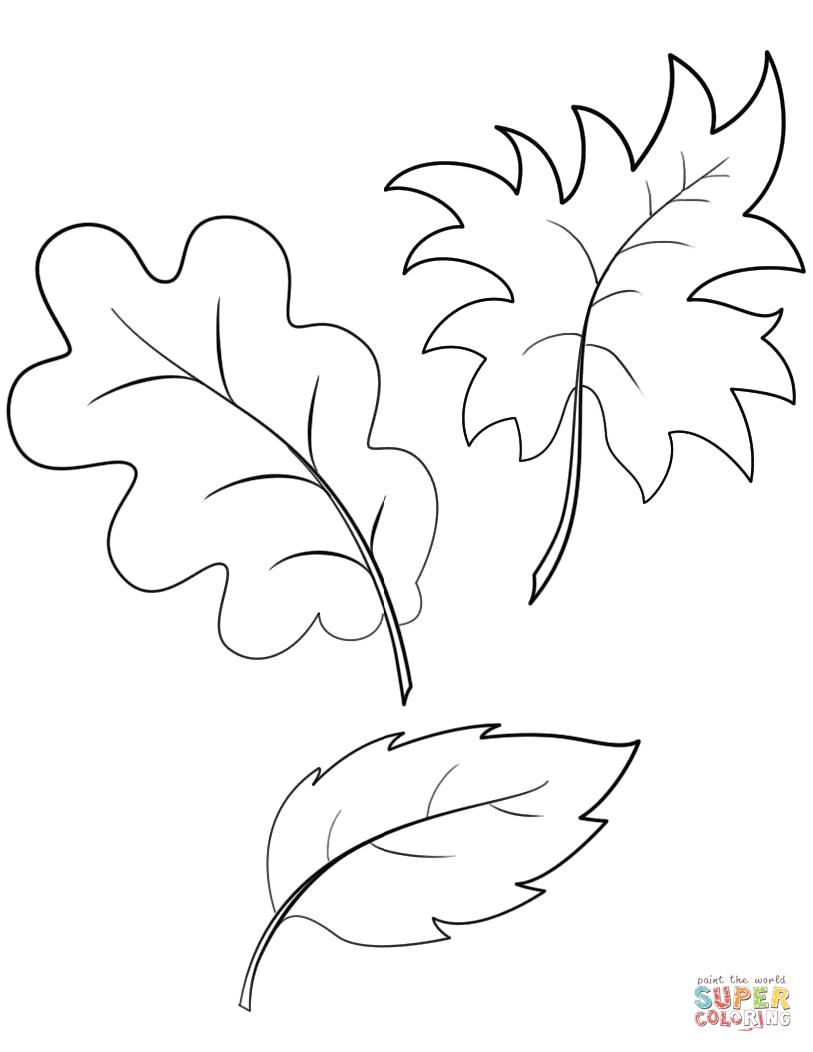 leaves to colour in autumn or fall leaves coloring pages free printable leaves in colour to