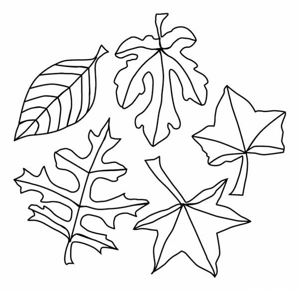 leaves to colour in leaf coloring page plants in leaves colour to