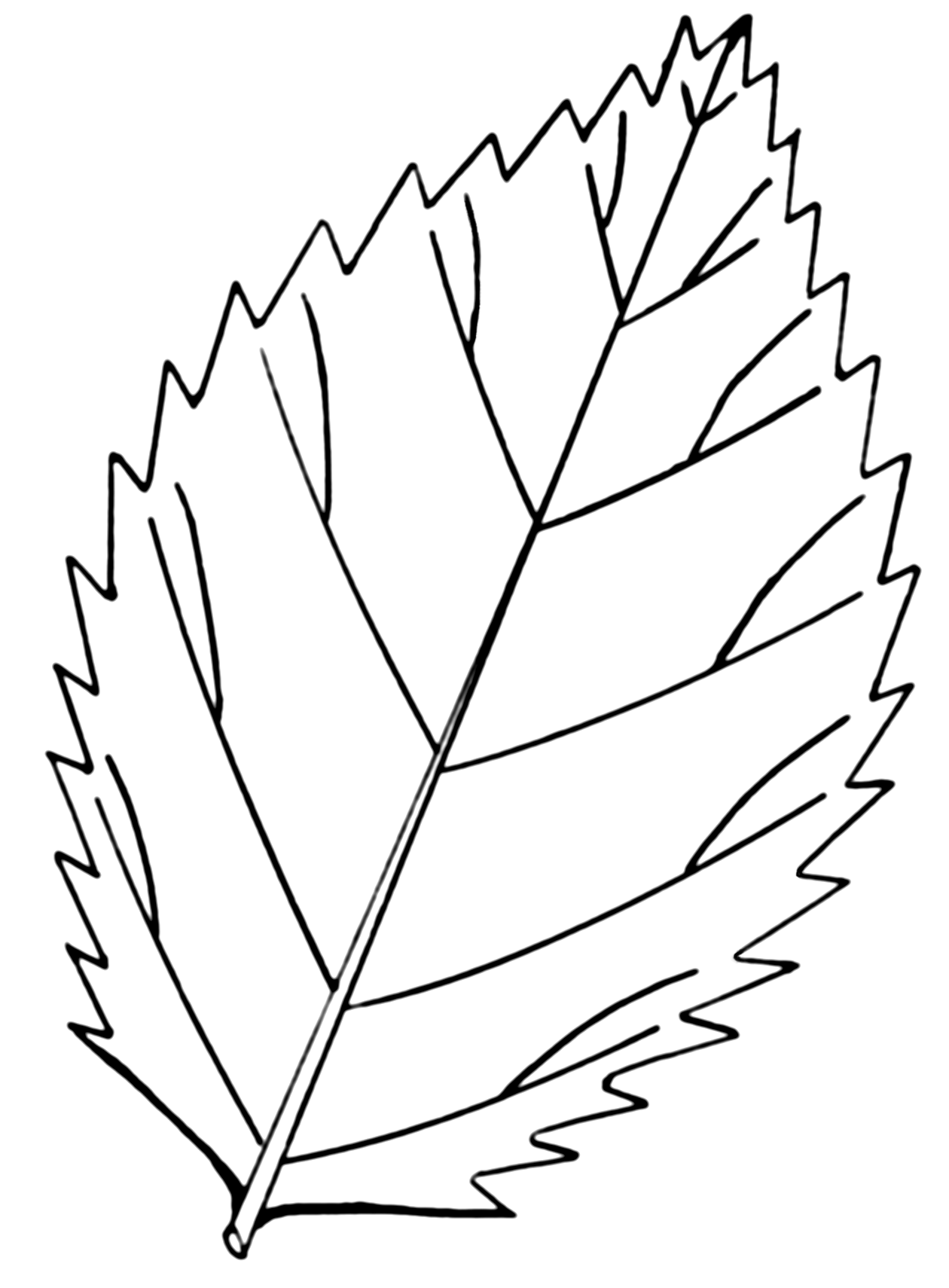 leaves to colour in leaves to colour in colour in leaves to