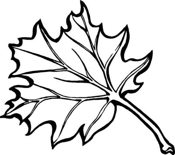 leaves to colour in oak leaf autumn coloring page flowers templates in colour to leaves