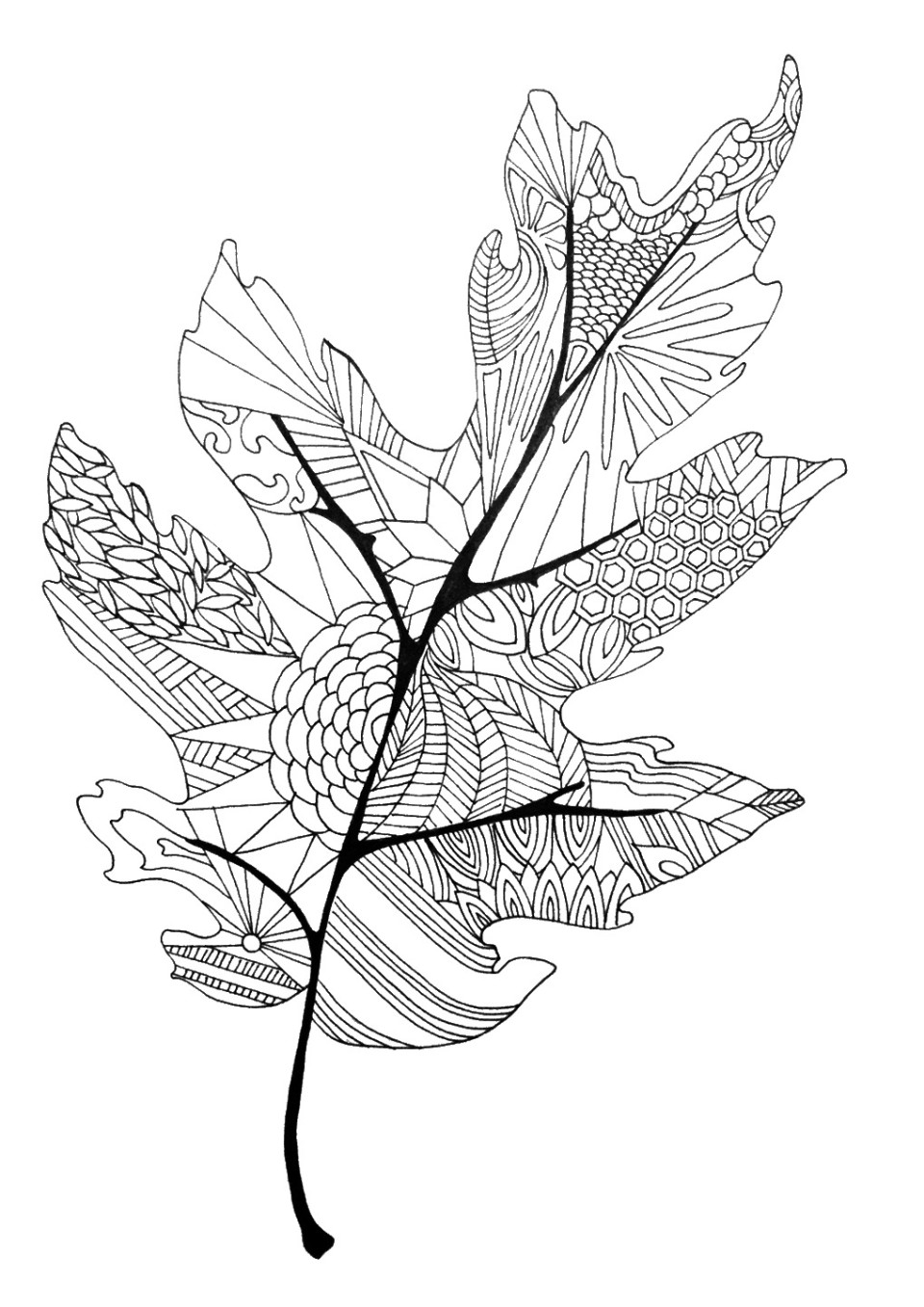 leaves to colour in the best free pattern drawing images download from 4990 in to leaves colour