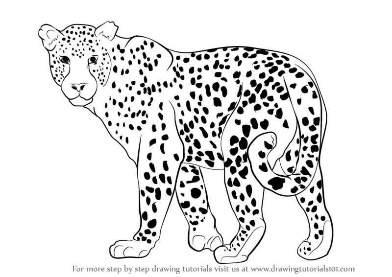 leopard outline step by step how to draw a leopard drawingtutorials101com leopard outline