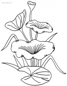 lily pad coloring sheet 12 lily coloring pages fun interactive notebook pdf printables sheet coloring pad lily