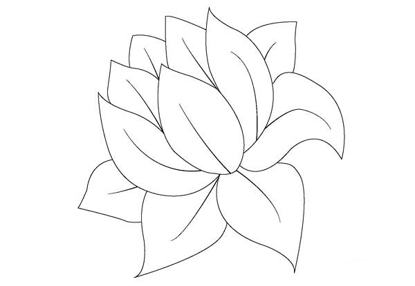 lily pad coloring sheet coloring page lily pad printable coloring clipart best lily sheet pad coloring