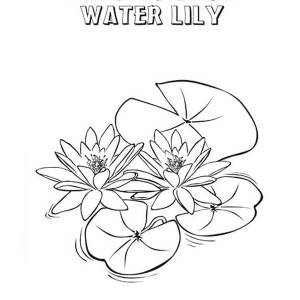 lily pad coloring sheet frog love to sit on lily pad coloring page color luna coloring pad lily sheet