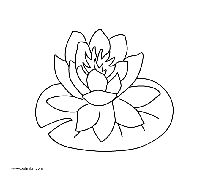 lily pad coloring sheet lily pad flower coloring pages coloring home lily pad sheet coloring