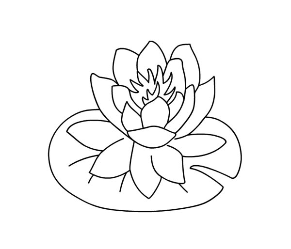 lily pad coloring sheet lily pads coloring page sheet pad coloring lily