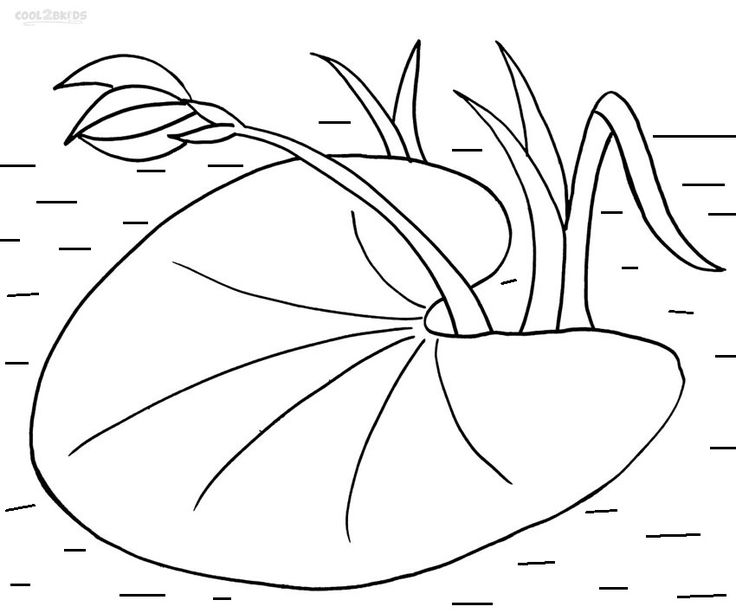 lily pad coloring sheet printable lily pad coloring pages for kids cool2bkids lily coloring pad sheet