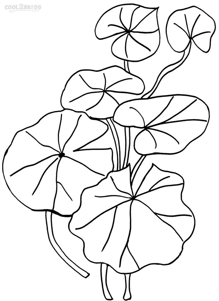 lily pad coloring sheet printable lily pad coloring pages for kids cool2bkids pad coloring sheet lily