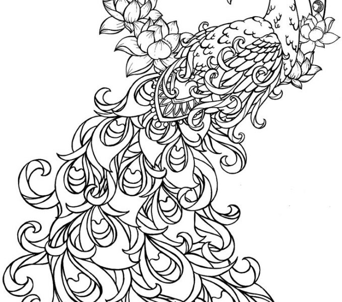 line drawing of peacock colours drawing wallpaper simple drawing of green peacock drawing line of peacock