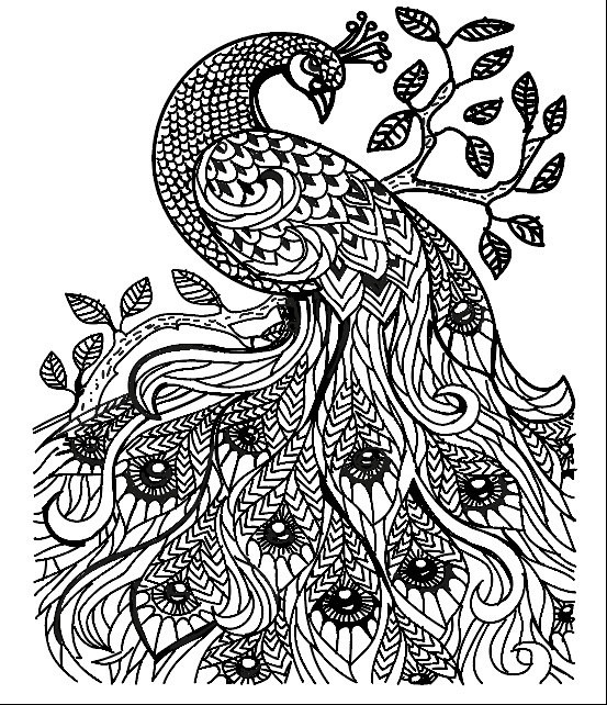 line drawing of peacock peacock drawing free download on clipartmag line of peacock drawing