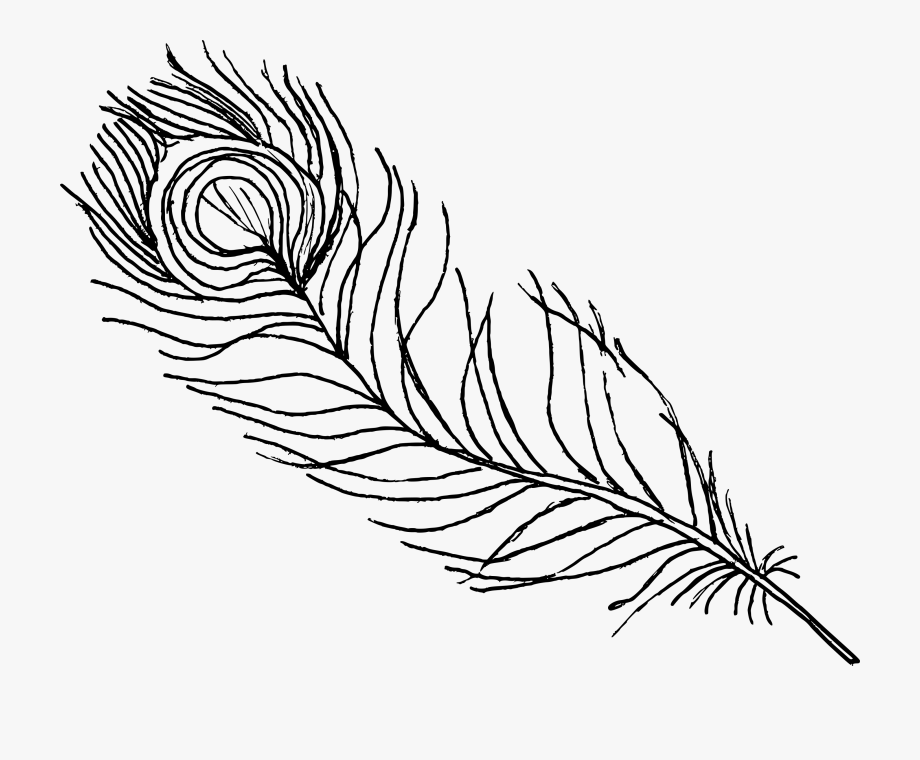 line drawing of peacock peacock line art peacock images png free transparent line of drawing peacock