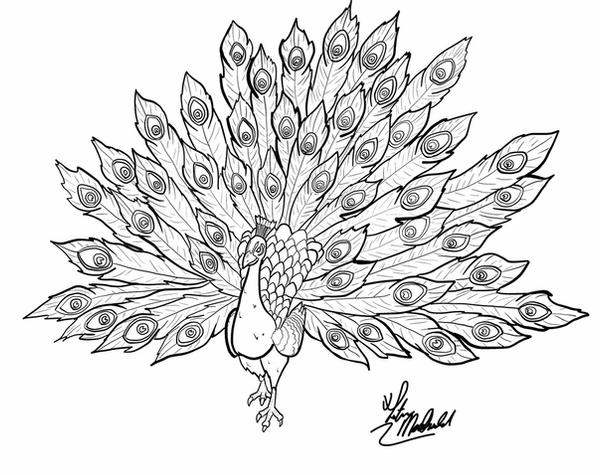 line drawing of peacock simple colorful peacock drawing google search peacock drawing peacock of line