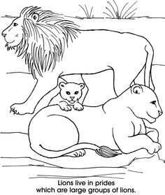 lion family coloring pages lion king family coloring page printable coloring pages coloring pages lion family