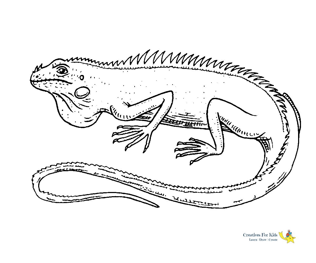 lizard for coloring iguana lizard coloring pages download print online for coloring lizard
