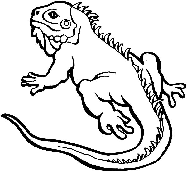 lizard for coloring lizard coloring pages coloring pages to download and print lizard for coloring