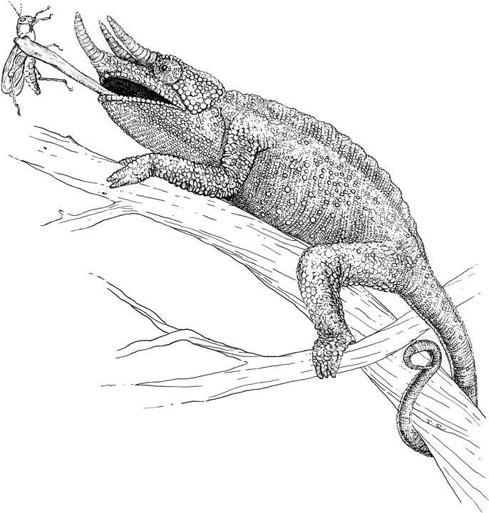 lizard for coloring monitor lizard coloring pages download and print for free for coloring lizard